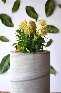 Weekend Project: Make These Large-Scale Modern Concrete Planters   Curbly