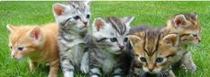 Cat care tips. A cat's behavior can be a very complex thing to understand. They can be fractious in addition to picky and extremely demanding. Cats do not simply need their particular physical needs to be fulfilled but also their emotional needs. Cute Kittens, Cat Having Kittens, Pet Urine, Pet Odors, Cat Care Tips, Pet Care, Pregnant Cat, Animal Gato, Kitty Cats