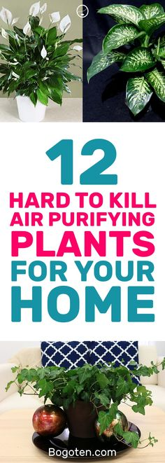 I kill plants all of the time but these hard to kill plants are great for me. Plus they help make the air in my home better! #Gardening #Plants #HomeDecor