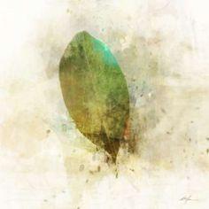 Falling Birch Leaf Canvas Art - Ken Roko (24 x 24)