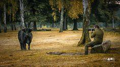 Woordloze Woensdag Schotse Hooglander Koe Wild Boswachterij Dorst