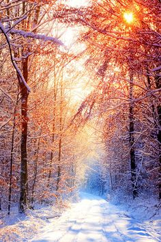 #Winter by Delias Dimitris via sinisa majetic - Google+   #winterscape #WinterSunrise