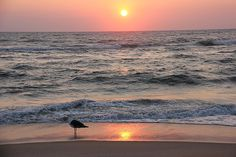 Travel Contest: In the United States Photo #123298: Mingle: Kansas City community photos - Great pic taken of sunrise on our beach by visitor Mike Wheeler.