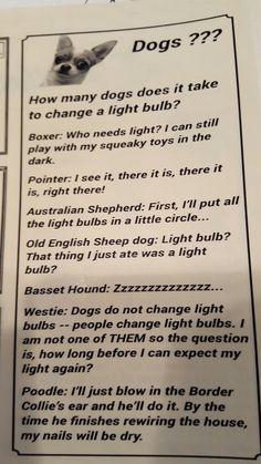 Fun words from some Top Dogs! Australian Shepherd, Cool Words, Fur Babies, Dogs, Fun, Aussie Shepherd, Pet Dogs, Doggies, Hilarious