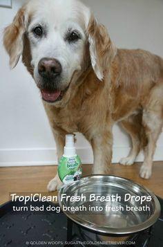 Bad Dog Breath Into Fresh Breath w/ TropiClean Fresh Breath Drops #TropiCleanFresh #ad | Just 3 Drops. Fresh Breath. No Brushing
