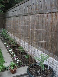DIY tomato cages made from concrete wire mesh.