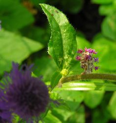 Crafty Caterpillar Puts Flowers on Back for Camouflage «TwistedSifter Moth Caterpillar, Bee Friendly, Wildlife Conservation, Plant Species, Native Plants, Permaculture, Natural Wonders, Amazing Nature, Garden Projects