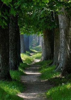 Il cammino della vita è avventuroso come il sentiero di un bosco. K