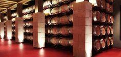 De los mejores viñedos de Cenicero, San Vicente de la Sonsierra y sus localidades más próximas surgen los caldos del grupo Bodegas Riojanas. Y es que esta empresa lleva más de cien años elaborando vinos con las mejores uvas de la zona.