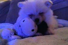 Loves his donkey Donkey, Love Him, Jackson, Teddy Bear, Dogs, Animals, Animais, I Love Him, Animales
