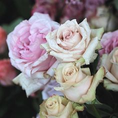 Have a great day and smell some roses if possible :)