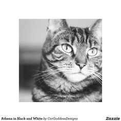 Search for customizable Cat posters & photo prints from Zazzle. Check out all of the spectacular designs or make your own! Animal Shelter Donations, Feline Leukemia, Cat Coloring Page, Black And White Canvas, Cat Posters, Cat Photography, Cool Pets, Exotic Pets