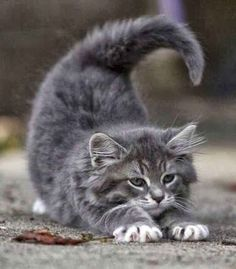 My Number One Cutie Patootie - Click to see loads of great pictures of cats and kittens to brighten your day