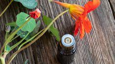 Připravte si z ní bylinnou tinkturu! Alternative Medicine, Backyard, Beautiful, Gardening, Fitness, Health, Medicine, Per Diem, Syrup