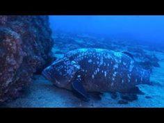 Madeira - Tauchen mit Garajau Diving im Nationalpark. #madeira #secretmadeira #Portugal