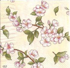 flores 3 - Isabel Brioso - Álbuns da web do Picasa
