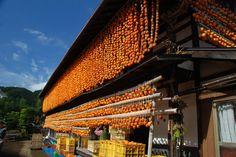 Koro柿(枯露柿)之里