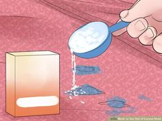 how to get rid of a mildew odor in carpet mildew stains. Black Bedroom Furniture Sets. Home Design Ideas