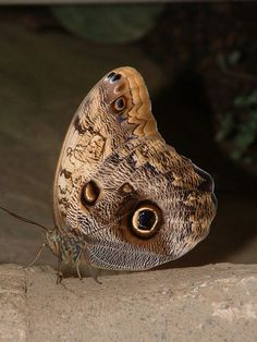 To Whit To Whoo at #Wisley #butterflies  www.pinterest.com/annbri/