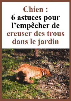 Dressage, Reptiles Et Amphibiens, Basset Hound, Pets, Animals, Bindi, Woody, Patience, Comme