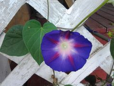 What's the Story, Morning Glory