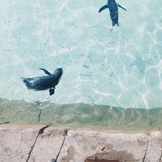 beachy vibes ocean aesthetics pleasing feed summer feels summer animals penguins