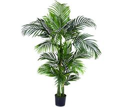 Air Purifier House Plant--One of the BEST air purifier plants for general air cleanliness