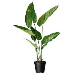 and Home Furnishings FEJKA Artificial potted plant IKEA Lifelike artificial plant that remains looking fresh year after year.FEJKA Artificial potted plant IKEA Lifelike artificial plant that remains looking fresh year after year. Cheap Artificial Plants, Artificial Plant Wall, Artificial Flowers, Fake Plants Decor, Plant Decor, Faux Plants, Cool Ideas, Trees To Plant, Plant Leaves