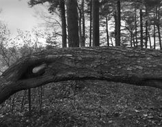 Massachusetts-based artist and photographer Arno Rafael Minkkinen, who was born in Helsinki, has a curious photography process. Wherever he roams, he emerges with photo perspectives that are really unique by merging his body with his surroundings. Among his works, the ones from his Hands and Feet series really stand out.