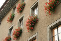 Swiss windowboxes overflowing with striking red geraniums