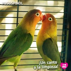 Razón #115 para Amar a Pinol  Pinol te ayuda a limpiar la jaula de tus pájaros.