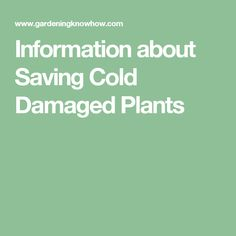 Information about Saving Cold Damaged Plants