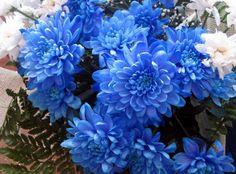 blue chrysanthemum bouquet - Google Search