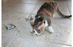 27 Hilarious Photos Of Cats Going Crazy On Catnip (Slide #24) - Pawsome