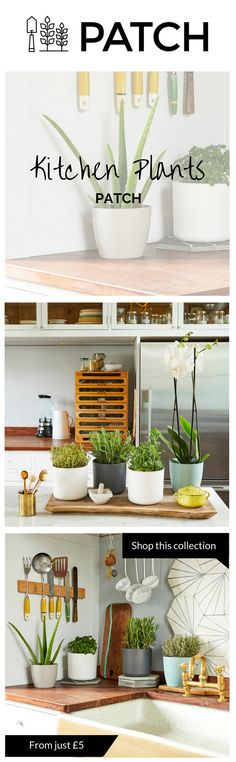 Our kitchen plants include an indoor kitchen herbs garden, Orchids, Aloe Vera, succulents and small houseplant ferns.   In the kitchen, space comes at a premium so that's why we've selected some small beautiful plants to bring some life to your kitchen.  Whether inside or outside your home or office, Patch helps you choose the best plants for you and delivers them to your door.  Follow @HelloPatch on Instagram for urban gardening and indoor plant/houseplant or gardening inspiration!