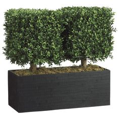 WP 7668 Boxwood Topiary in Rectangular Bamboo Container Green Boxwood Plant, Boxwood Hedge, Boxwood Topiary, Topiaries, Artificial Topiary, Artificial Plants And Trees, Artificial Flowers, Bamboo Planter, Planters
