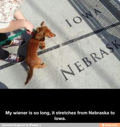 Long Wiener - Funny pictures and memes of dogs doing and implying things. If you thought you couldn't possible love dogs anymore, this might prove you wrong. Funny Cats And Dogs, Funny Animals, Cutest Animals, Benny And Joon, The Meta Picture, Dump A Day, Weenie Dogs, Doggies, Dachshund Love