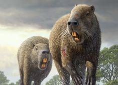 Gryzonie wielkie jak grizzly? Dwa miliony lat temu chodziły po ziemi