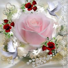 The perfect Pink Rose Animated GIF for your conversation. Discover and Share the best GIFs on Tenor. Flowers Gif, Beautiful Rose Flowers, Beautiful Gif, All Flowers, Hearts And Roses, Romantic Images, Glitter Graphics, Pink Roses, Pale Pink