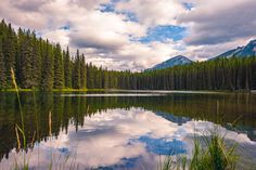 Mid-Summer at Pilot PondSomewhere in AlbertaAugust 2015