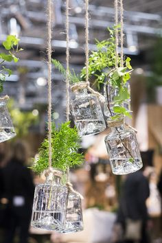 Hanging glass bottles, little herb garden Balcony Garden, Indoor Garden, Indoor Plants, Outdoor Gardens, Home And Garden, Herb Garden, Decoration Plante, Plants Are Friends, Green Rooms