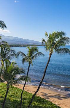 Beach and palms trees in the morning at Sugar Beach Kihei Maui