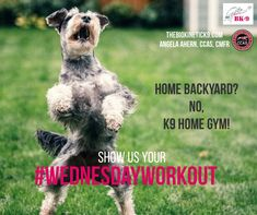 Show Us, Athletes, Backyard, Dogs, Movies, Movie Posters, Animals, Patio, Animales