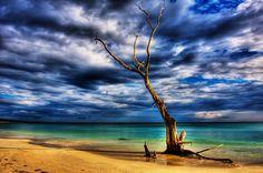 Lone Tree: Photo by Photographer Mallav Naik - photo.net