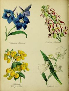 Frontispiece and colour illustrations taken from 'The English...