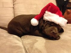This little guy who just can't wait to cuddle the rest of Christmas away with his new mom. | 16 Puppies Who Were Under The Tree This Christmas Morning
