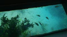 Meadow Center Glass Bottom Boat