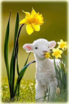 Ostern – Famous Last Words Nature Animals, Farm Animals, Animals And Pets, Cute Little Animals, Cute Funny Animals, Beautiful Creatures, Animals Beautiful, Cute Animal Photos, Sheep And Lamb