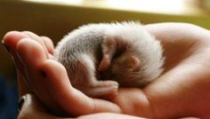 young ferret - http://www.Ferret-World.com/babyferretpictures.html