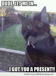 Dude, let me in.... I brought you dinner